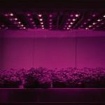 plantlab 001