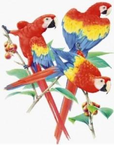 triple-parrots