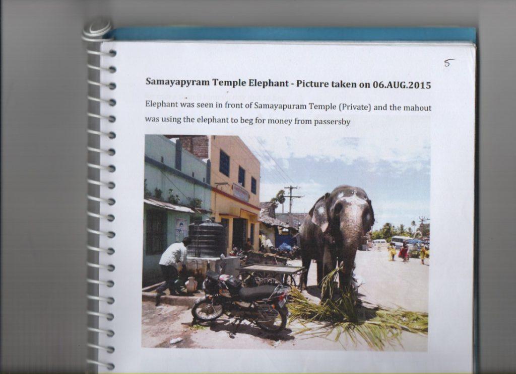 Samayapuram Private Elephant-1
