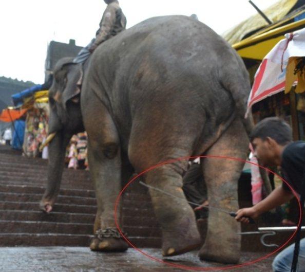 Sunder the Elephant-2