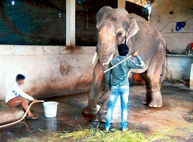 Sunder the Elephant-3