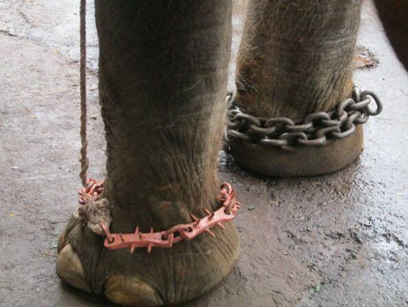 Sunder the Elephant-4