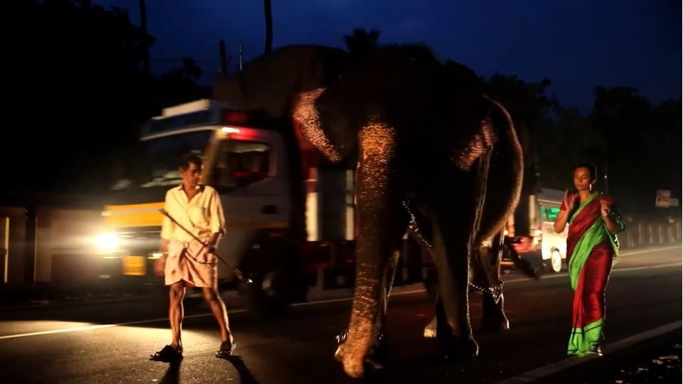 Mahout Venugopal - Elephant Lakshmi - Sangita Iyer