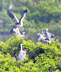கார்ப்பரேட்  வைரஸ் பறவைகளையும் தாக்கும்